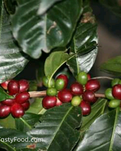 Behind the Scenes of Coffee