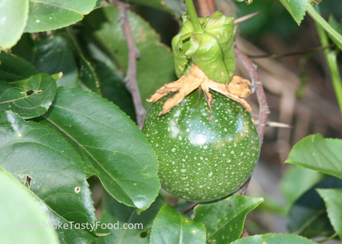 a young passion fruit growing
