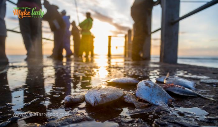 Fresh fish being caught by fisherman from the sea, and laid out on a jetty.